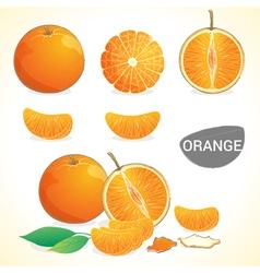 Set of oranges fruit in various styles vector