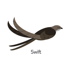 swift or swiftlet isolated on white background vector image