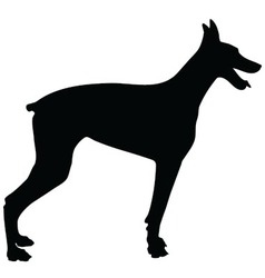 Doberman Silhouette vector image vector image