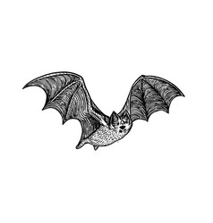 bat engraving style vector image