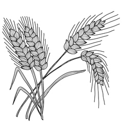 Decorative wheat vector