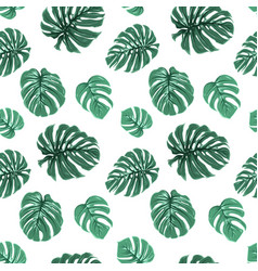 Exotic tropical green monstera leaves pattern vector