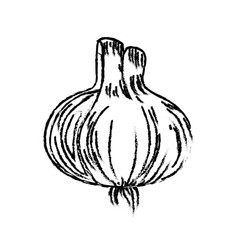 Figure fresh garlic natural vegetable nutrition vector