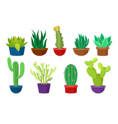 flat set of different cacti in colorful vector image
