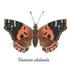 Red admiral butterfly with its latin name vector