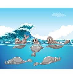 Seals swimming in the ocean vector