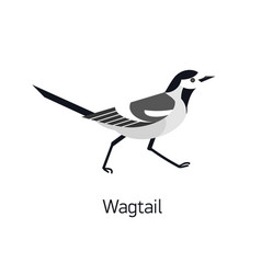 wagtail isolated on white background adorable vector image