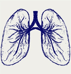 Lungs person vector image