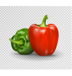 realistic of sweet pepper 3d vector image vector image