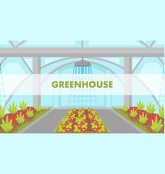berries growing in greenhouse web banner vector image