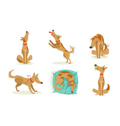 Collection funny brown dog in different vector