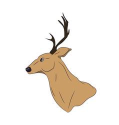 deer portrait vector image