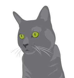 Grey Cat Portrait vector