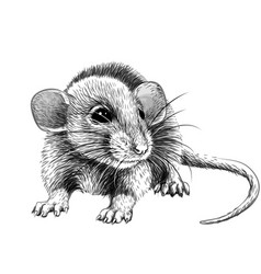 Mouse hand-drawn graphic black and white sketch vector