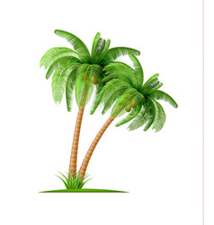 realistic palm tree with coconuts 3d exotic vector image vector image