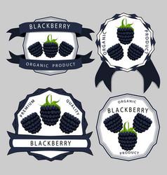 the theme blackberry vector image