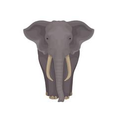 Adult african elephant wild mammal animal vector