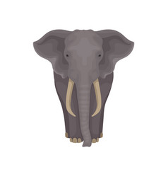 Adult african elephant wild mammal animal with vector