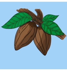 Almonds vector