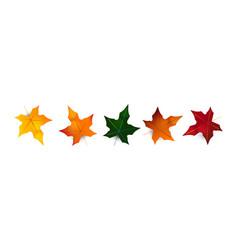 collection autumn leaves oak maple hawthorn vector image