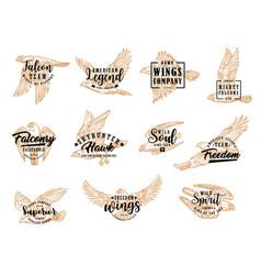 eagle falcon and hawk birds vector image