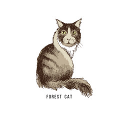 Hand drawn forest cat vector