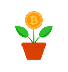 growth bit coin crypto potted plant vector image
