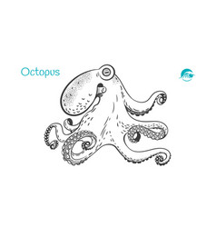 octopus hand-drawn vector image