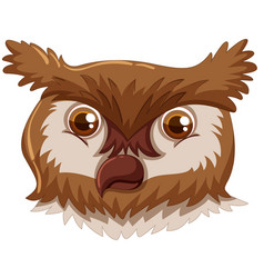 an owl face on white background vector image