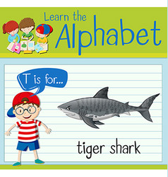 Flashcard letter T is for tiger shark vector