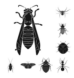 isolated object of insect and fly symbol set of vector image
