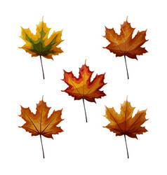 set of autumn maple laves in different autumnal vector image