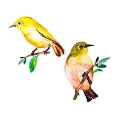 White-eye bird watercolor isolated on a white vector image
