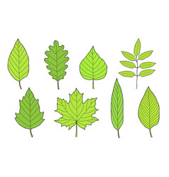 hand drawn set of green leaves vector image vector image