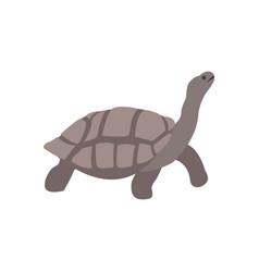 galapagos giant tortoise vector image