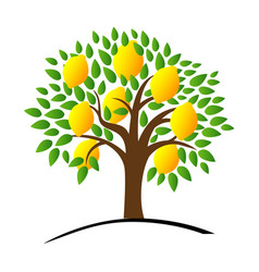 Lemon tree with green leaves vector