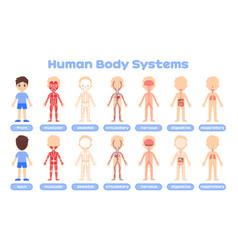Cartoon human body systems for medical education vector