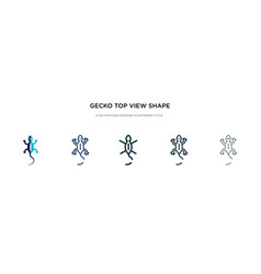 Gecko top view shape icon in different style two vector