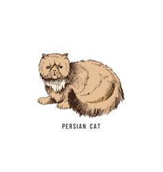 hand drawn persian cat vector image