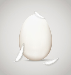 Egg in feathers vector image vector image
