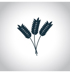 Wheat ears Flat icon vector image