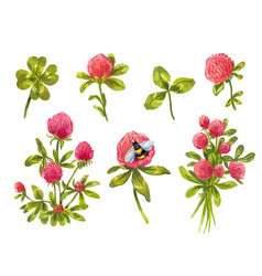 clover watercolor set beautiful spring floral vector image