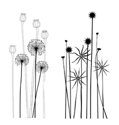 Collection wild plant poppies dandelion vector image vector image