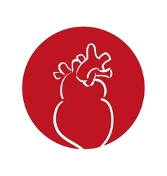 Heart human organ health red background vector