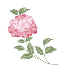 Single hortensia flower vector