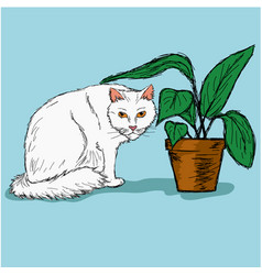 white cat and a pot vector image vector image
