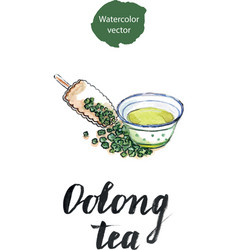 Dry chinese oolong tea leaf and oolong tea in vector