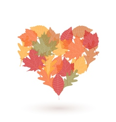 Heart with autumn leaves vector