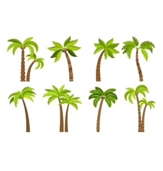 Palm trees isolated on white vector