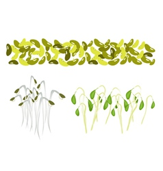 Set of Mung Beans and Sprouts on White Background vector